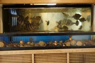 水槽に小田原市場で水揚げされた魚介類